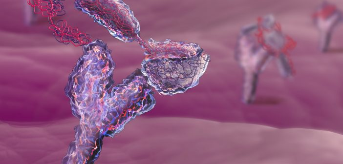 Immunotherapy for penile cancer