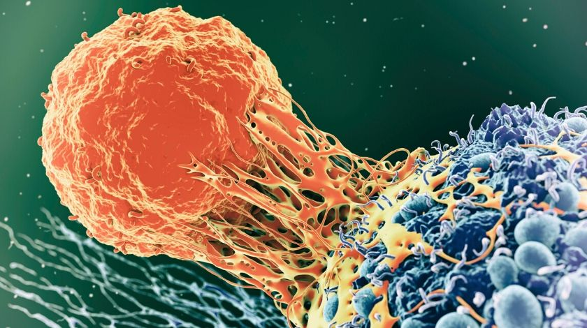 Newfound killer T cell could target most cancers
