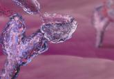 immuno-oncology, immunology, pd-l1